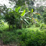 salak phet land sale 03