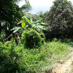salak phet land sale 06
