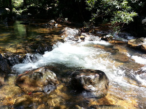 a stream on koh chang