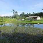 land and houses for sale in trat 16